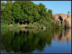 The Nile River, Aswan, Egypt (Saf') Tags: africa trees reflections river boat flora south egypt middleeast nile oasis nil aswan sud egypte barque flore fleuve afrique  saf thenile rivernile assouan  moyenorient phiaro upperegypt lenil  nachal thenileriver neilos  hauteegypte  southernegypt iteru piaro panasoniclumixdmcfz28 p longestriverintheworld  lepluslongfleuvedumonde safiaosman