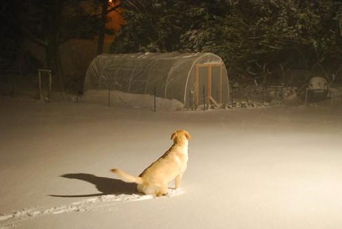 December Snow Storn