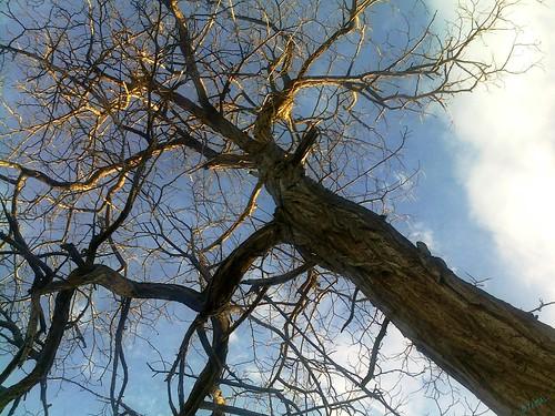 Arbre شجرة