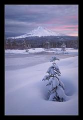 In A Frozen World... (Ryan Dyar) Tags: trees winter lake snow cold tree water sunrise frozen northwest mthood mounthood ryandyar gonnathrowatantrum
