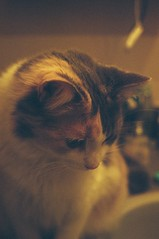 guill (Bongo Hovi) Tags: cute film cat 35mm focus pentax fluffy guill