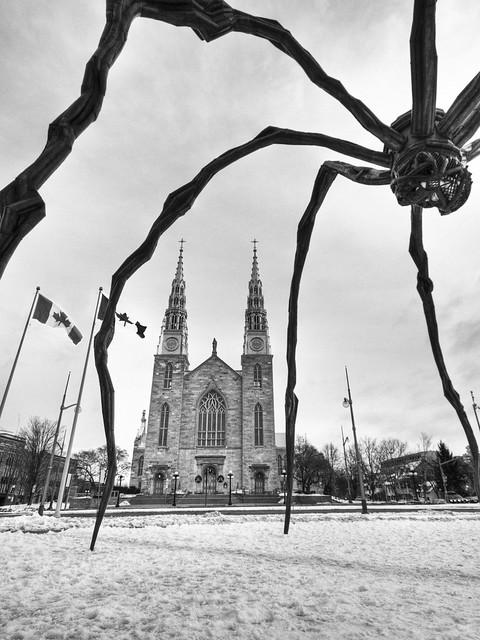 Framed by an Arachnid