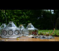 RECICLADO / Recycled (ángel mateo) Tags: insectos cristal almería jardín trampa reciclado ángelmartínmateo ángelmateo