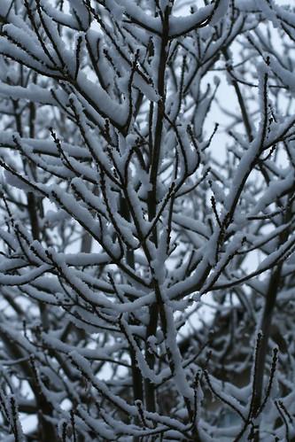 Jan 03 - Summerlin Snow