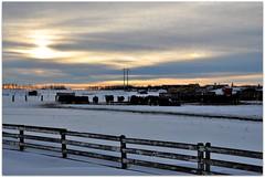 Rural Alberta (Stella Blu) Tags: stella winter snow canada cold rural blu alberta prairies gamewinner nikkor18200 yourock1st nikond5000 herowinner pregamewinner