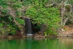 Save Our Green (Izania) Tags: park winter plants reflection green nature water japan silk vivid slowshutter nagoya d3000 savethegreen nikond3000 izania