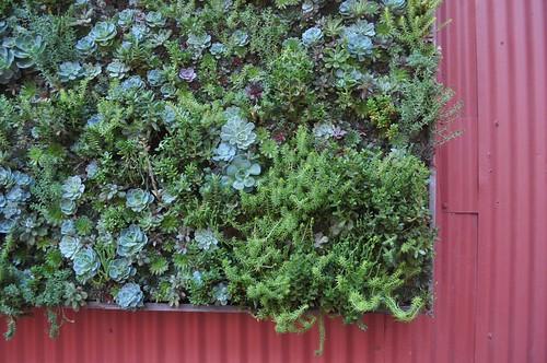Succulent vertical wall