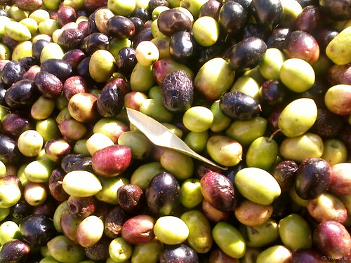 Olives Triffa زيتون تريفة