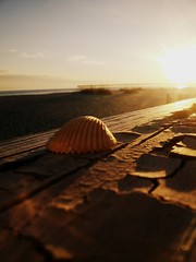 Seashell (A&P Photography) Tags: ocean sunset beach seashells