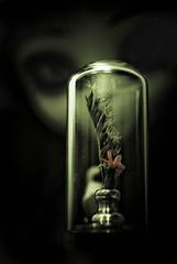 la petite fleur sous verre (  Pounkie  ) Tags: flower fleur noir pullip glance nero regard vendu no pullipnero noprenn lapetitefleursousverre expokitchenette112011