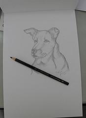 Sketch Of Simba