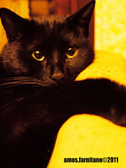 Nero (farnitano.amos) Tags: portrait italy black rome color roma animal closeup cat europa europe italia colore gatto ritratto nero animale