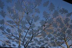 Blad (pieketoe) Tags: blad amersfoort dak planetree combinatie schothorst platanen bushokje bushaltensstationschothorst