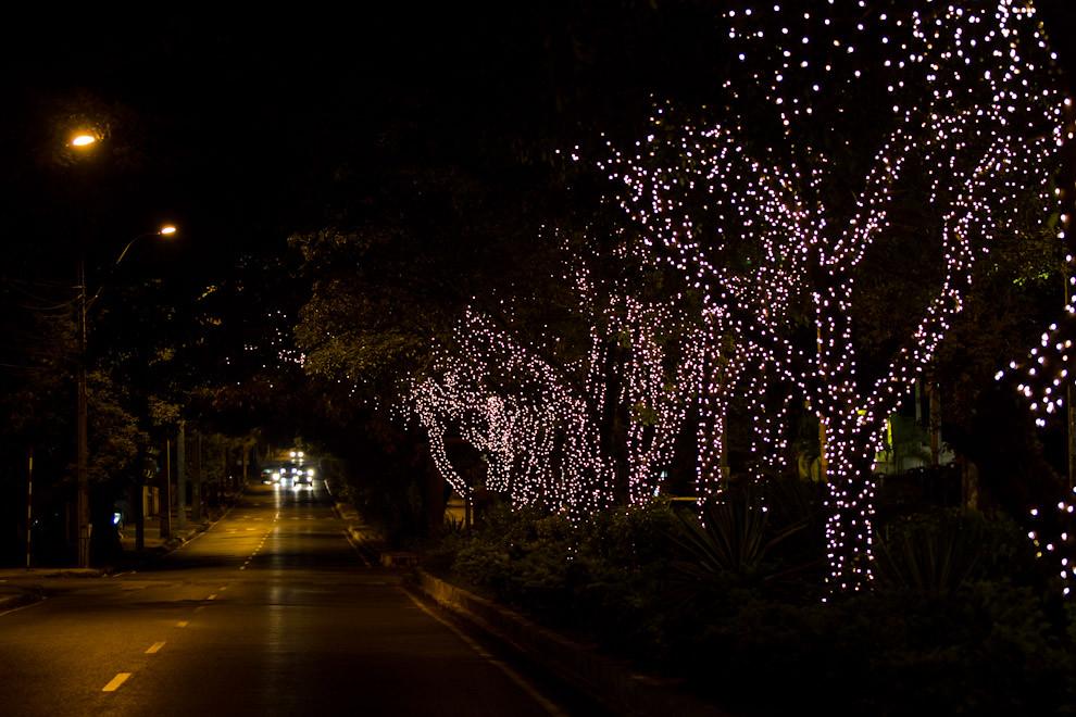 Las calles de Asunción  y muchos locales se vieron ataviadas para la llegada de las fiestas, en varias avenidas importantes los árboles fueron  decorados con miles de luces. (Tetsu Espósito - Asunción, Paraguay)