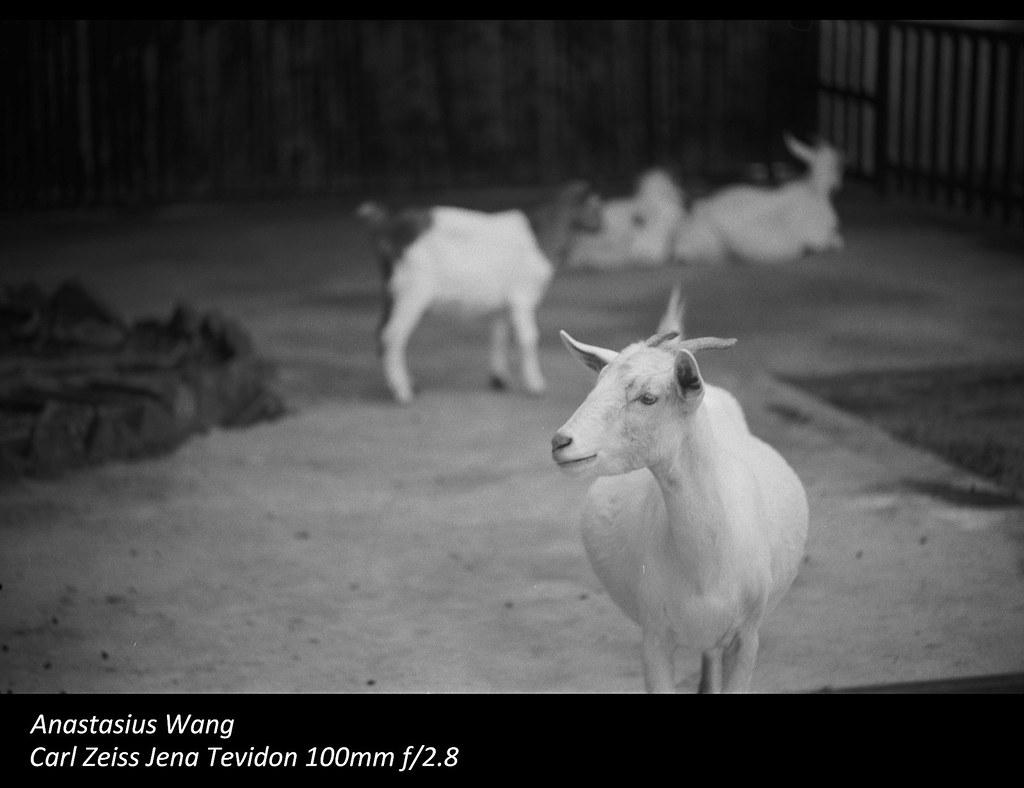 SZ Zoo 12