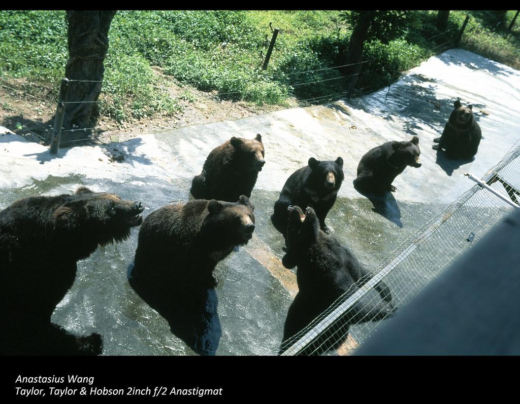 SZ Zoo 15