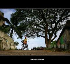 Life cycle (My Trip Guide) Tags: life travel people man tree tourism cycling kerala cycle cochin kochi mattanchery eranakulam keralalife aswathi233 mtv233 mattancherymarket