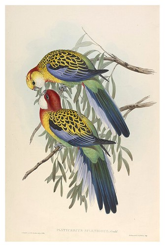 031- Periquitos esplendidus-The Birds of Australia  1848-John Gould- National Library of Australia Digital Collections