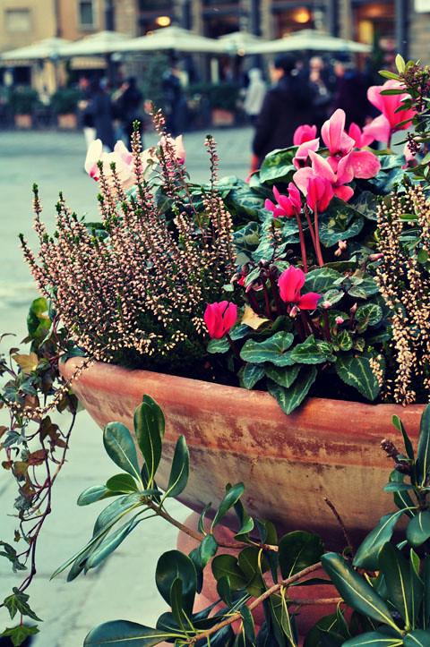 {flower monday.26}