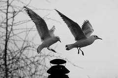 Bird change (_Bruno Silva) Tags: paris france bird birds frana pssaro pssaros sena riosena laseine