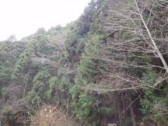 Mid age Nakayama 中世中山