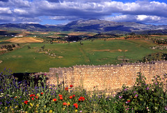 Ronda: a wall (sergiopigo) Tags: flowers panorama espaa landscape andaluca spain rocks view country campagna ronda poppies fiori andalusia rocce spagna papaveri httpballoonaprivatthumbloggercom