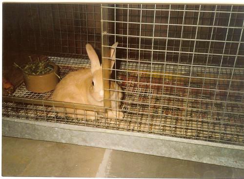 barney cage