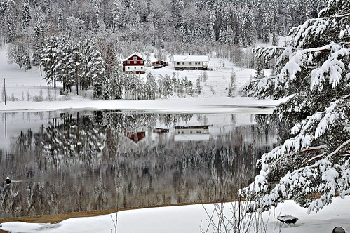 Winter Reflections.