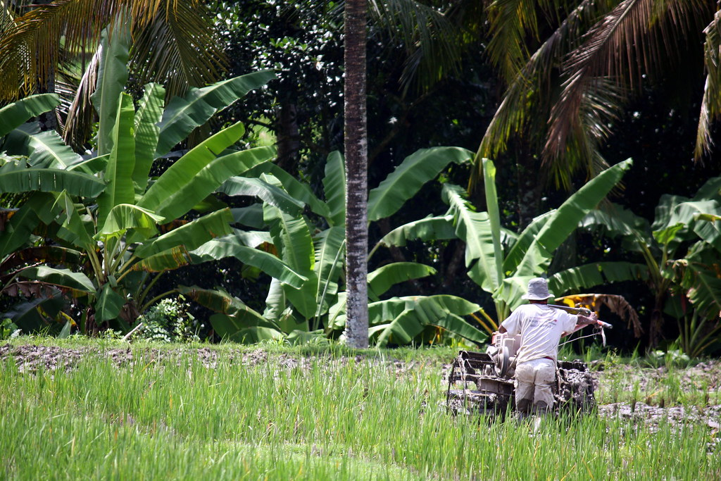 Working the fields, Ubud, Bali