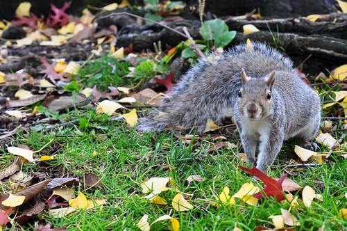 squirrel in Boston Public Garden
