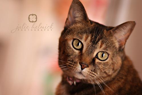 Elsie, I love her bright eyes