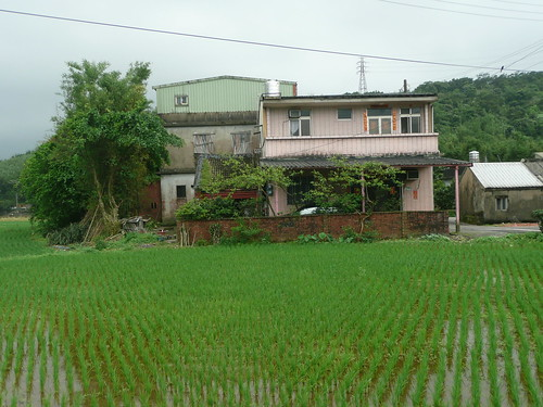 House in the Rice Paddy