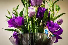 (satoshikom) Tags: canoneos60d canonef1635mmf28liiusm kitchen flower eustoma