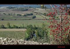 Percorrendo la Via Francigena - Along the Via Francigena (Jambo Jambo) Tags: pontedarbia buonconvento monteronidarbia siena toscana tuscany italia italy arbia viafrancigena viafrancigenatappa13 panorama landscape colline hills cretesenesi campagna countryside sonydscrx100 jambojambo