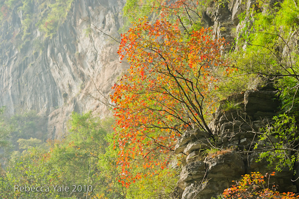 RYALE_Yangtze_Three_Gorges_64
