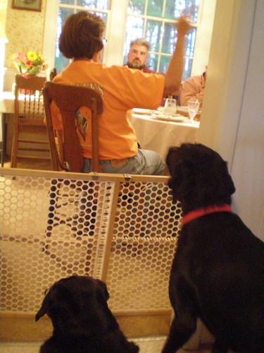 Dogs want dessert
