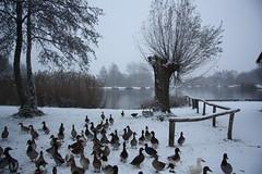 Weerfoto maandag 29 november (Omroep Brabant) Tags: brabant weer omroepbrabant seizoenen weerfotos weerfoto wwwomroepbrabantnl brabantseseizoenen