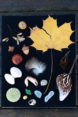 Shadow out of the box (Dawn Suzette) Tags: shadowbox giftsfromnature naturecraft themagnifyingglass naturefromnovascotia
