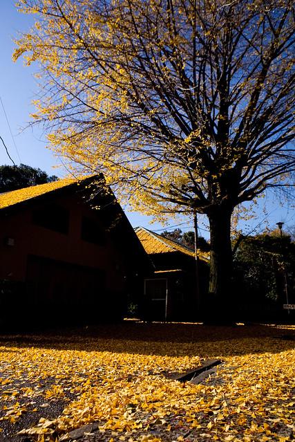 秋色の装飾