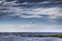 I am a little bit different. (Pdiddy3g) Tags: morning blue light sea sky cloud seascape bird beach nature water beautiful clouds photoshop canon landscape photography eos freedom exposure sweden dream clarity sharp clear lonely adjust oland 2470mm skane 2470 50d