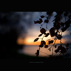 clinical depression (stella-mia) Tags: autumn light sunset lake fall silhouette norway dark evening mood moody dof darkness bokeh explore depression melancholy frontpage hamar mjøsa melancholia 2470mm melancholyc clinicaldepression canon5dmkii