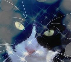 Unforgettable Vinicio (marta) Tags: blackandwhite cats chats unforgettable gatti indimenticabile vinicio catnipaddicts