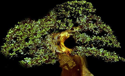 """Bonsai 087 • <a style=""""font-size:0.8em;"""" href=""""http://www.flickr.com/photos/30735181@N00/5261326139/"""" target=""""_blank"""">View on Flickr</a>"""