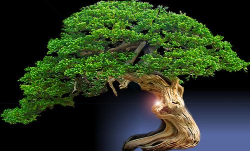"""Bonsai041 • <a style=""""font-size:0.8em;"""" href=""""http://www.flickr.com/photos/30735181@N00/5261338689/"""" target=""""_blank"""">View on Flickr</a>"""