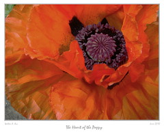 The Heart of the Poppy (Walter A. Aue) Tags: flowers macro novascotia blumen poppy mohn floralappreciation