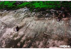 1492 (Erdpr) Tags: nature canon paradise raw outdoor natureza minimalism snails discovery americas colombo conquest xsi newworld 1492 novomundo descobrimento caramujos navigations conquestofparadise riddleyscott erdpr aconquistadoparaiso