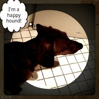 Cooper settling in!