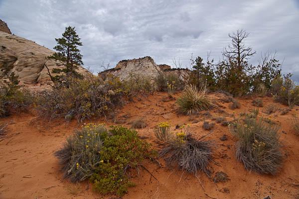 Zion Desert Scape II