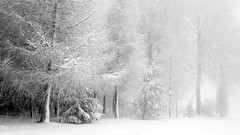 Forest (Andrew Lockie) Tags: winter snow ice rural forest landscape woods farm scene cotswolds christmastree farmland narnia chippingcampden escarpment cotswold