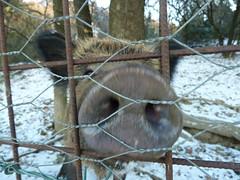 P1000184 (gzammarchi) Tags: italia natura campagna neve animale paesaggio pianura cinghiale camminata itinerario castelsanpietrobo